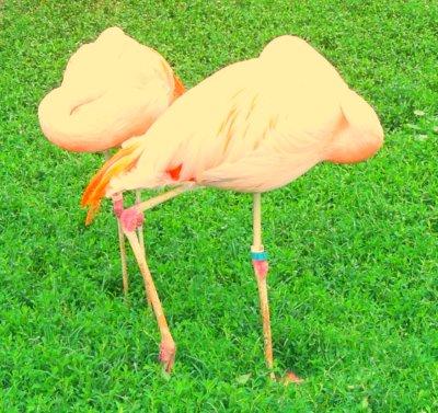 more pink flamingos