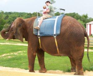 dad child on an elephant