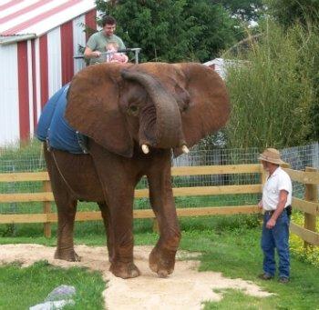 dad riding on an elephant